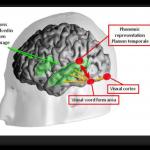 Neuronal Recycling