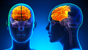 the frontal lobe: the seat of executive functions